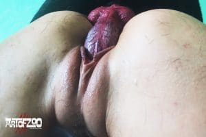 Art of Zoo - Arion - Screaming Art - dog porn movie